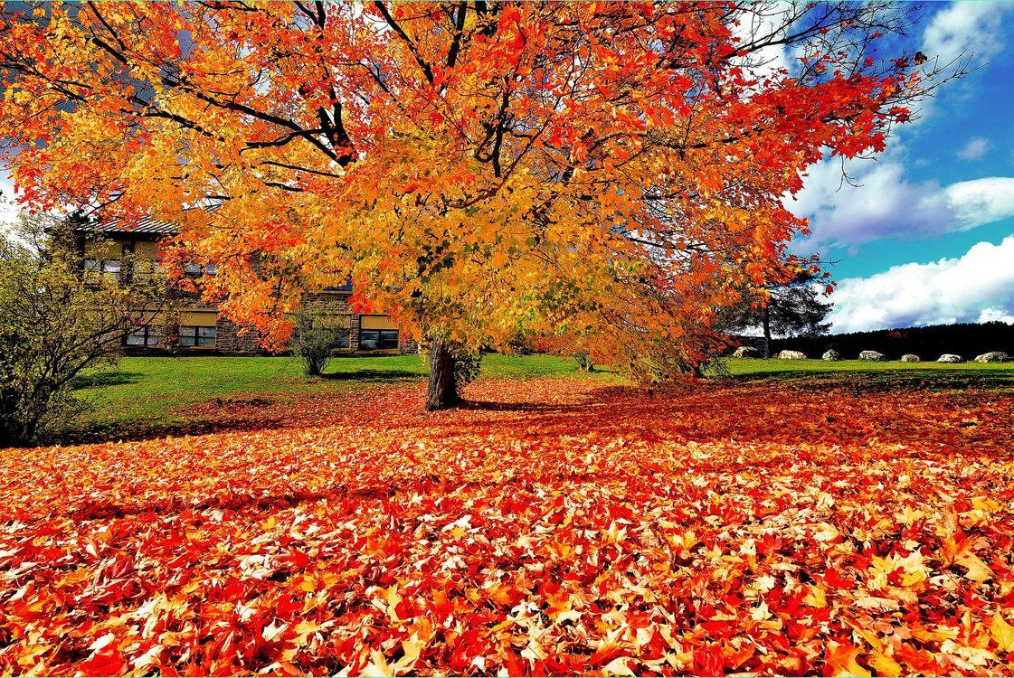 Photos for free landscape, autumn leaves, autumn colours - to the desktop