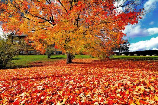 Заставки пейзаж, осенние листья, осенние цветы