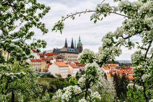 Фото бесплатно Прага, цветущая яблоня, дерево