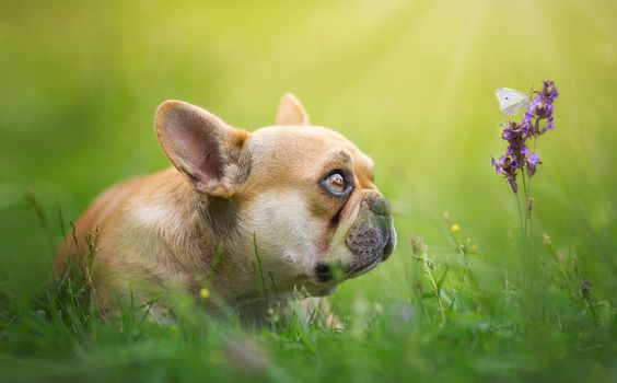 Puppy and Butterfly · free photo