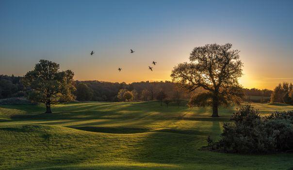 Photo free field, ducks, hills