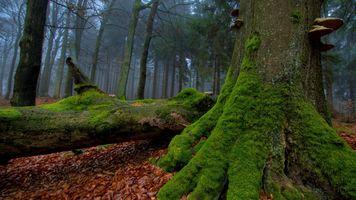 Заставки лес,природа,мох,листья,дерево,осень