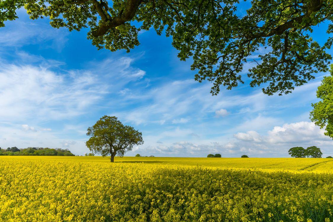 Фото бесплатно цветы, дерево, деревья - на рабочий стол