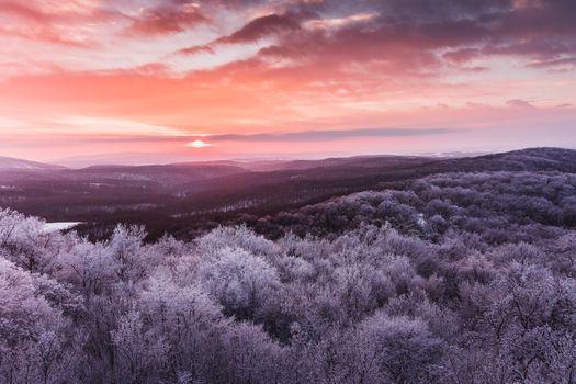 Фото бесплатно иней, закат, макушки деревьев