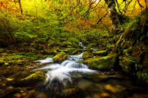 Заставки ручей, деревья, поток