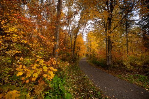 Осенняя лесная тропинка