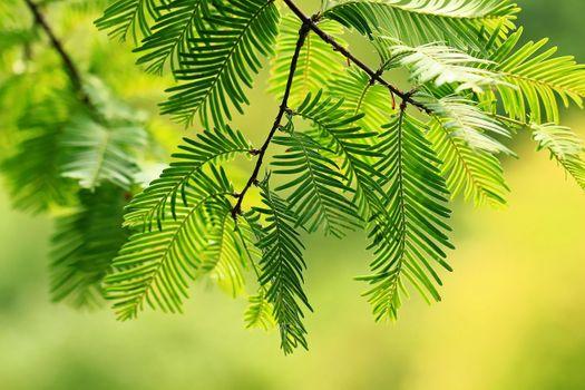 Фото бесплатно веточки, листья, дерево