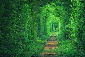Фото бесплатно листья, природа, железнодорожные