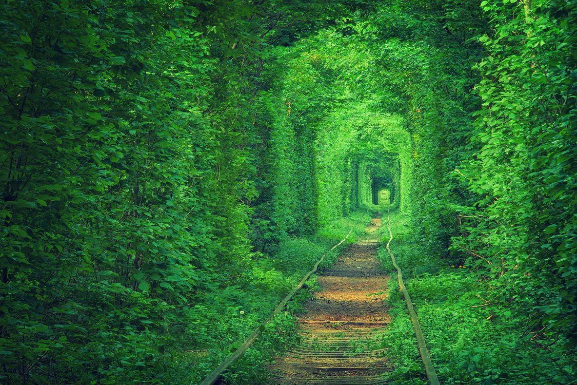 Фото бесплатно природа, растения, листья, железная дорога, природа