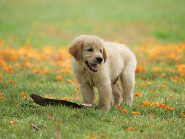 Щенок на лужайке · бесплатное фото