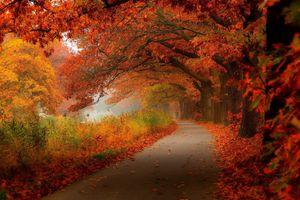 Фото бесплатно осень, лес, прогулка