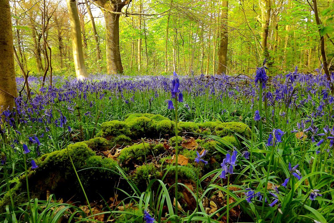 Фото бесплатно природа, макро, лес - на рабочий стол