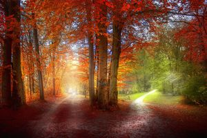 Бесплатные фото осень,лес,деревья,дорога,тропинка,природа,пейзаж