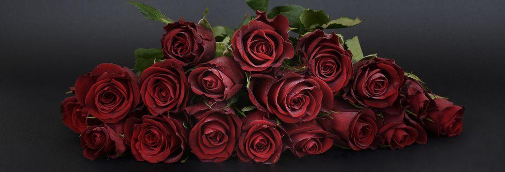 Бесплатные фото розы,цветы,флора,чёрный фон,панорама