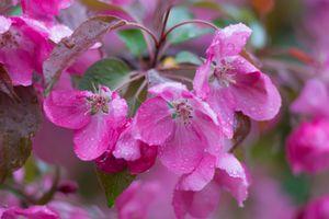 Ветка яблони · бесплатное фото
