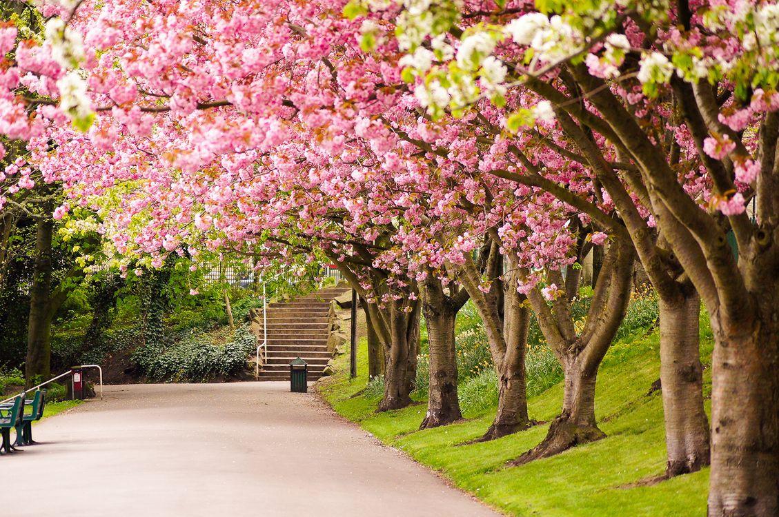 Фото цветение Великобритания Англия - бесплатные картинки на Fonwall