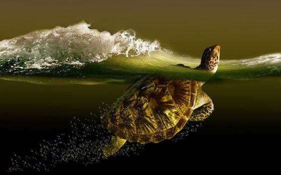 Фото бесплатно волны, пузыри, черепахи