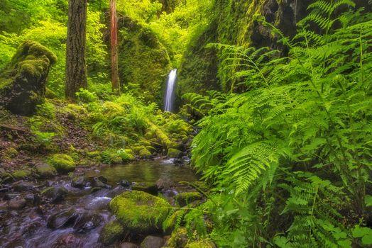 Фото бесплатно мох, папоротник, Oregon