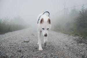 Бесплатные фото собака,домашнее животное,животное,blickwechsel,лес,дорога,туман