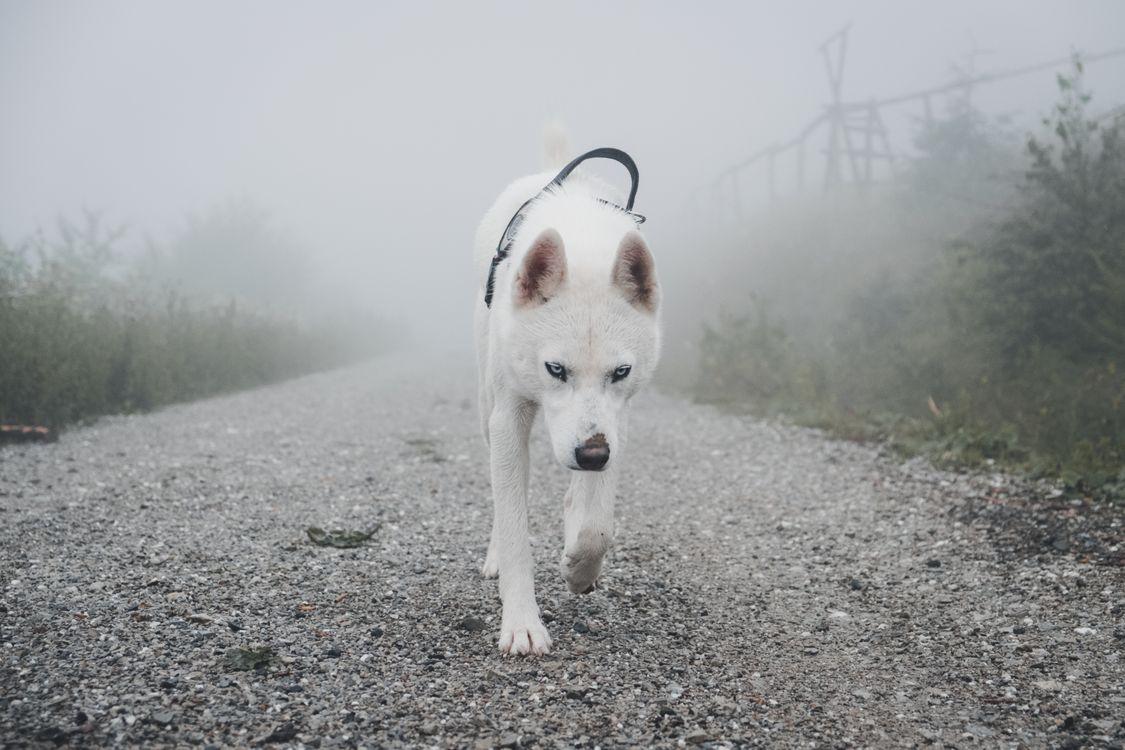 Фото бесплатно собака, домашнее животное, животное, blickwechsel, лес, дорога, туман - на рабочий стол