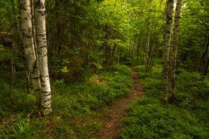 Заставки Тропинка, пейзаж, лес