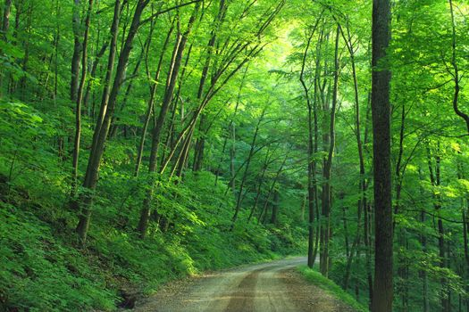 Photo free road among trees, forest steppe, summer