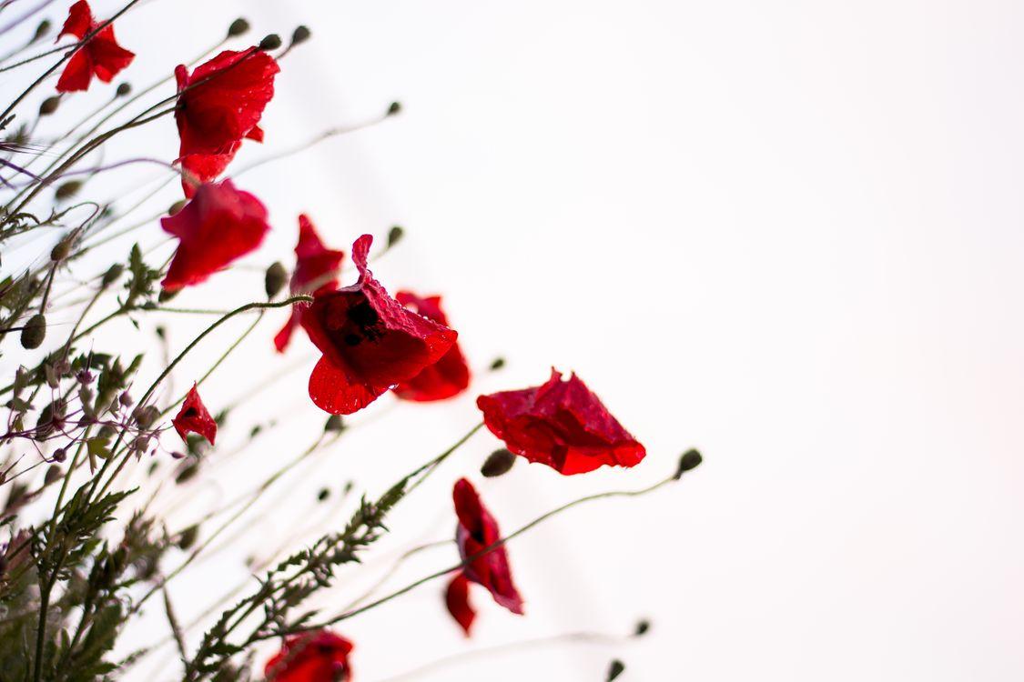 Фото бесплатно филиал, цвести, растение - на рабочий стол