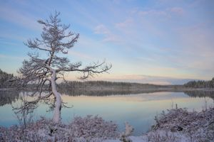 Фото бесплатно зима, озеро, лес, дерево, небо, пейзаж