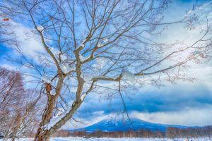 Фото бесплатно зима, вулкан, деревья