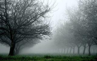 Фото бесплатно дымка, природа, пейзажи