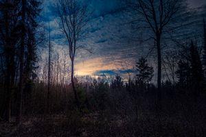 Заставки закат солнца, сумерки, лес