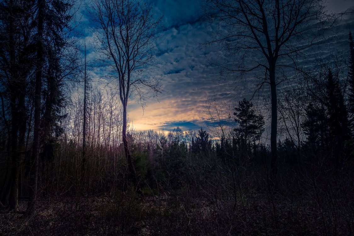Free photo sunset, dusk, forest, trees, silhouettes, sky, nature - to desktop