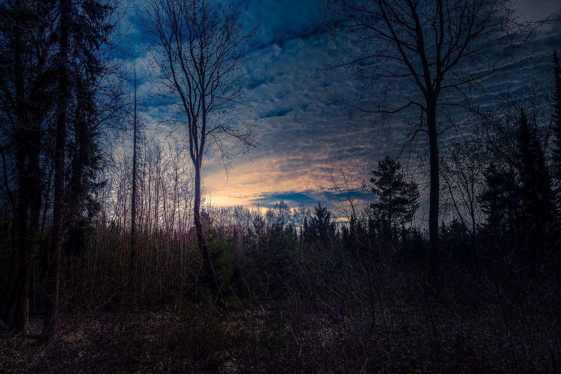 Фото бесплатно закат солнца, сумерки, лес, деревья, силуэты, небо, природа - на рабочий стол