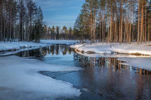 Заставки деревья, природа, лед