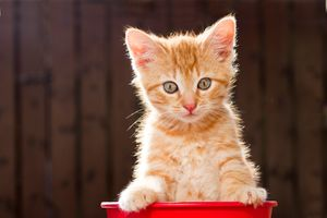 Котёнок позирует в ведре · бесплатное фото