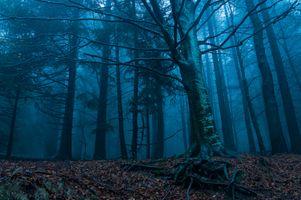 Фото бесплатно лес, утро, рассвет