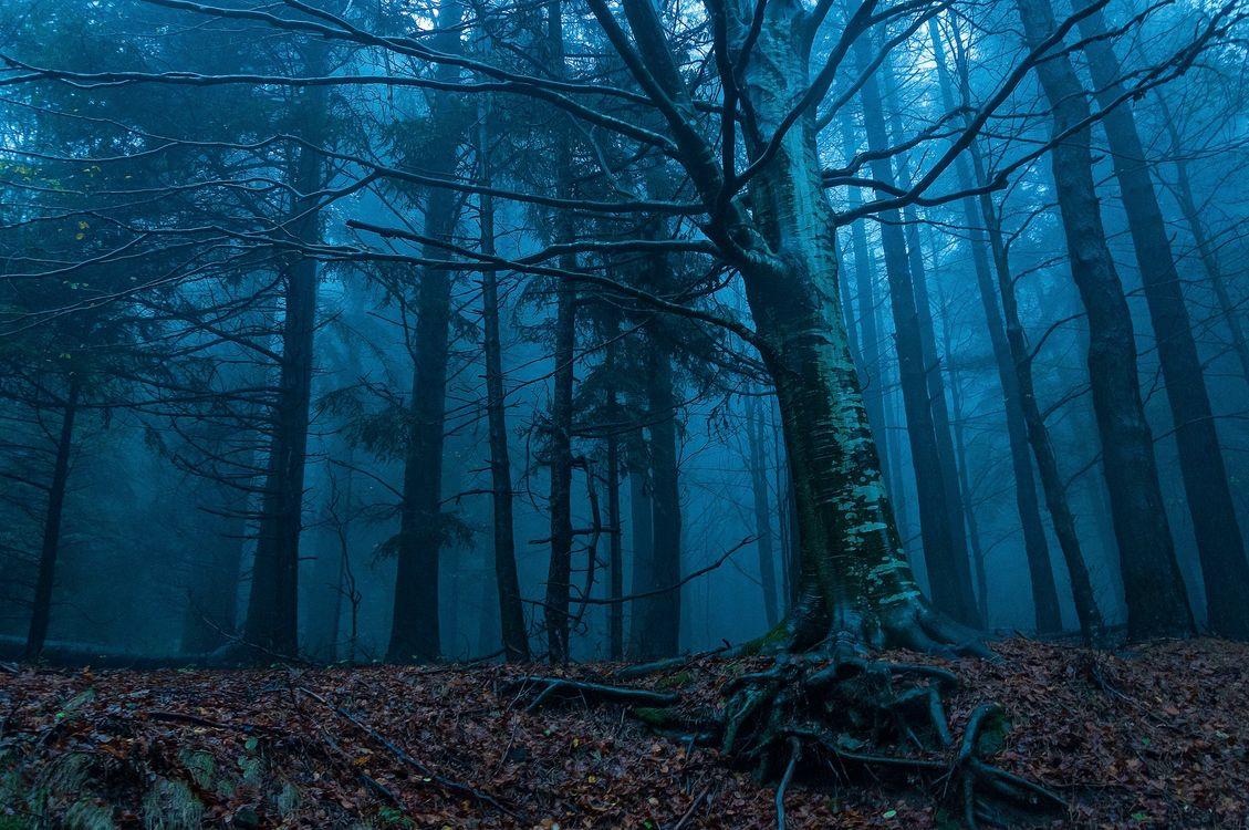 Фото бесплатно лес, утро, рассвет, деревья, туман, осень, пейзаж, пейзажи