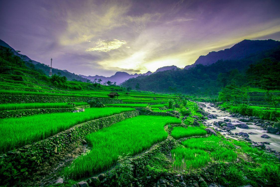 Обои Вьетнам, рисовые поля, закат солнца, горы, река, камни, природа, пейзаж на телефон   картинки пейзажи