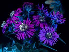 Фото бесплатно флуоресценция, цветы, макро