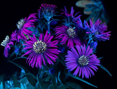 Photo free fluorescence, flowers, macro