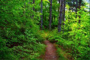 Бесплатные фото лес,деревья,тропинка,природа,пейзаж