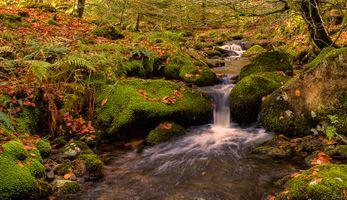 Бесплатные фото осень,лес,речка,ручей,водопад,камни,листья