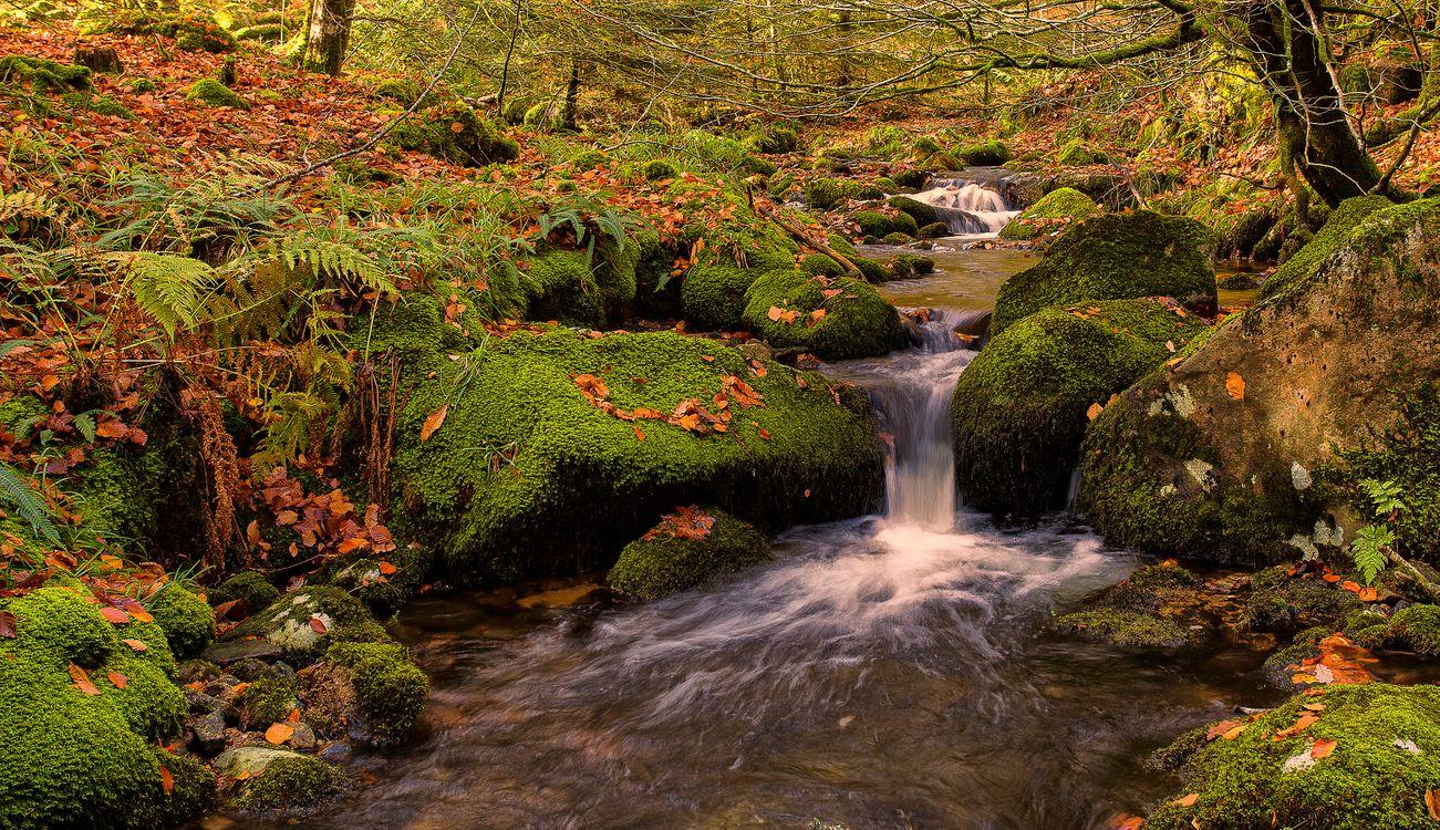 Фото бесплатно мох, река, природа - на рабочий стол