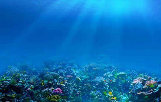 Фото бесплатно коралловый риф, глубина, море