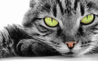 Заставки кошки, контраст, глаза