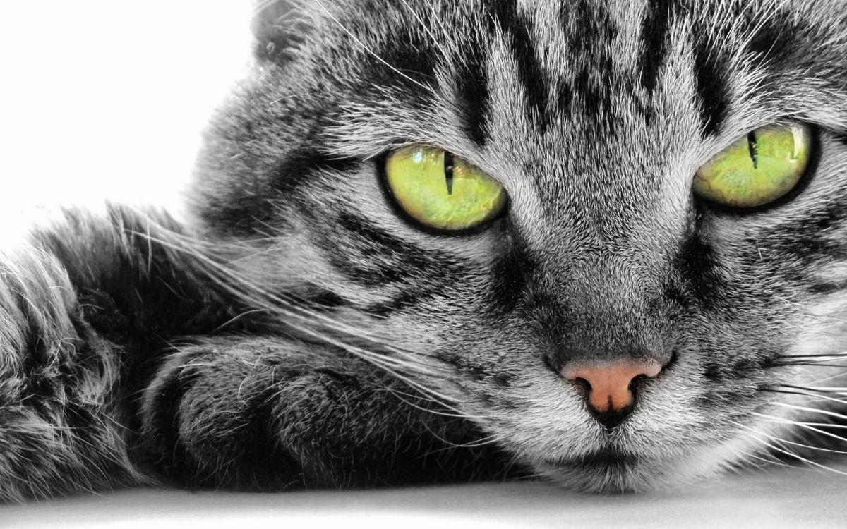 Фото бесплатно кошки, контраст, глаза, лицо, мех, нос, усы, кошки - скачать на рабочий стол