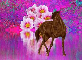 Photo free flowers, abstraction, horse