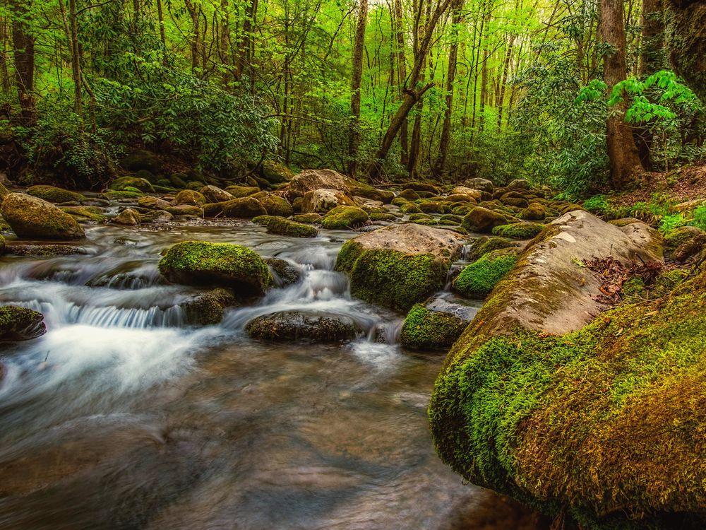 Фото бесплатно Great Smoky Mountains National Park, лес, речка - на рабочий стол