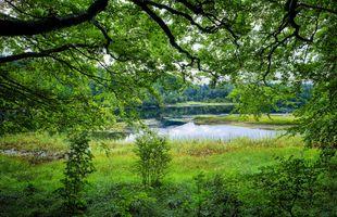 Бесплатные фото Norway,река,берег,трава,дерево,ветки,листья