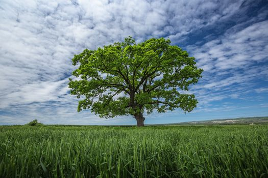 Фото бесплатно одинокое дерево, поле, природа
